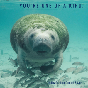 "Manatee with text ""you're one of a kind"""