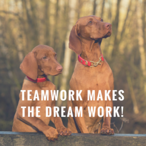 """Two brown dogs and quote """"Teamwork makes the dream work"""""""