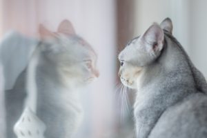 Kitten regarding self in mirror