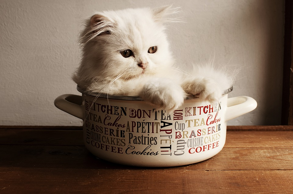 It's a cat in a cup!